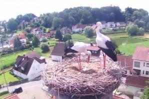 Storchencam in Röttenbach
